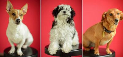 Dogs Triptych