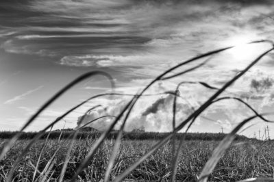 Sugar Cane Photography White Castle Louisiana7