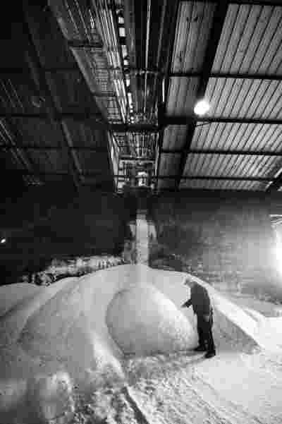 Sugar Cane Photography White Castle Louisiana13