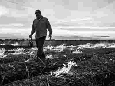Sugar Cane Photography White Castle Louisiana15