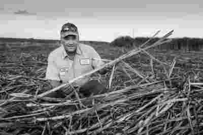 Sugar Cane Photography White Castle Louisiana27