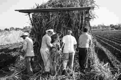 Sugar Cane Photography White Castle Louisiana29