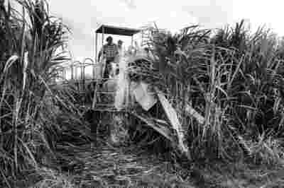 Sugar Cane Photography White Castle Louisiana33