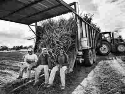 Sugar Cane Photography White Castle Louisiana36