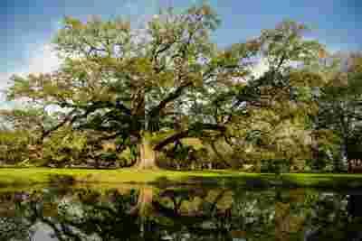 Best Professional Luxury Dream Wedding Venue Photography Nature Oak Tree on Pond at Houmas House Plantation Louisiana Photo 15