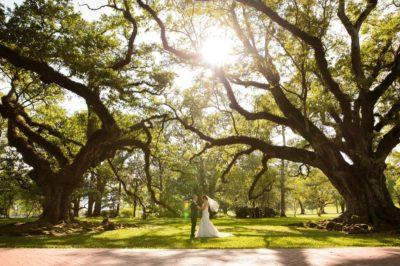 Oak Alley Plantation Weddings7