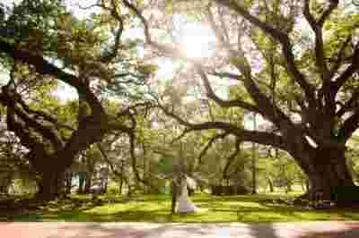 Oak Alley Plantation Weddings7