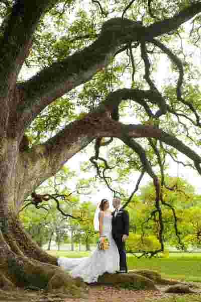 Oak Alley Plantation Weddings12