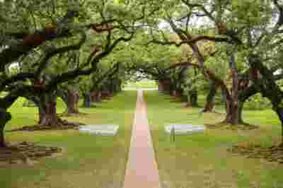 Oak Alley Plantation Weddings13